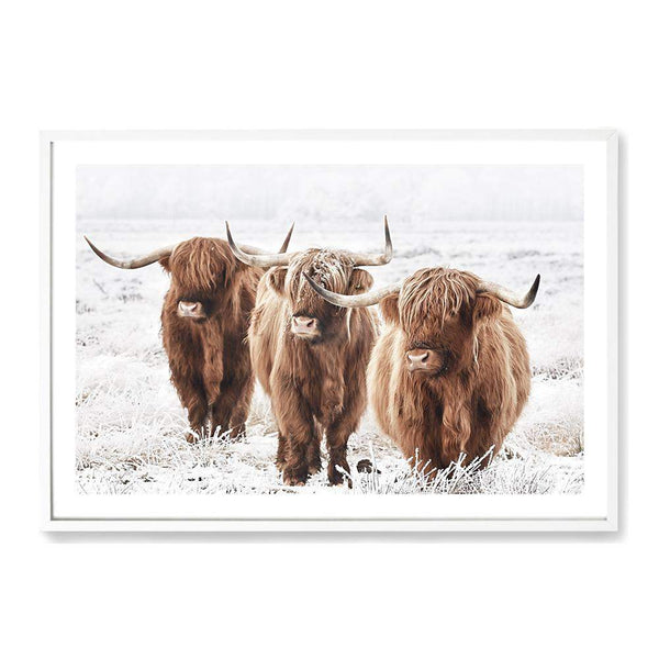 Highland Cattle Photographic Wall Art Print or Poster By The Paper Tree.