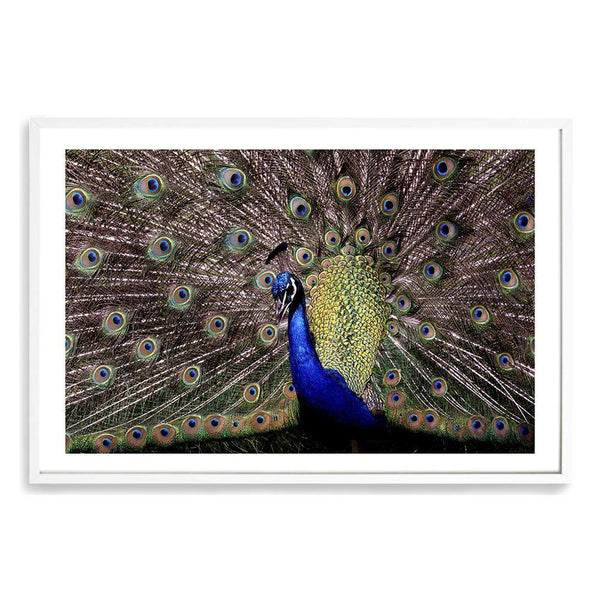 Percy The Peacock Photographic Wall Art Print or Poster By The Paper Tree.