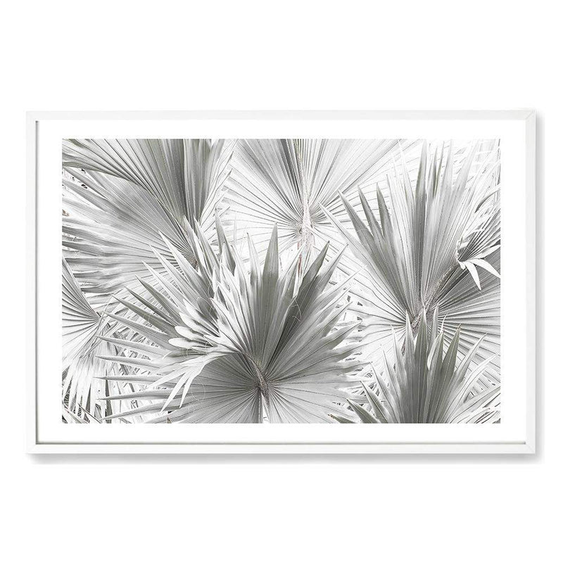 Bismark Palm Fronds Photographic Wall Art Print or Poster By The Paper Tree.