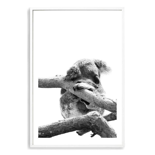 Sleeping Koala Photographic Wall Art Print or Poster By The Paper Tree.