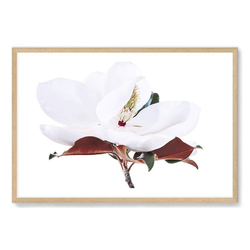 White Magnolia Art Print No.2