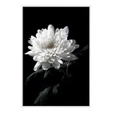 Chysanthemum Flower II Photographic Wall Art Print or Poster By The Paper Tree.
