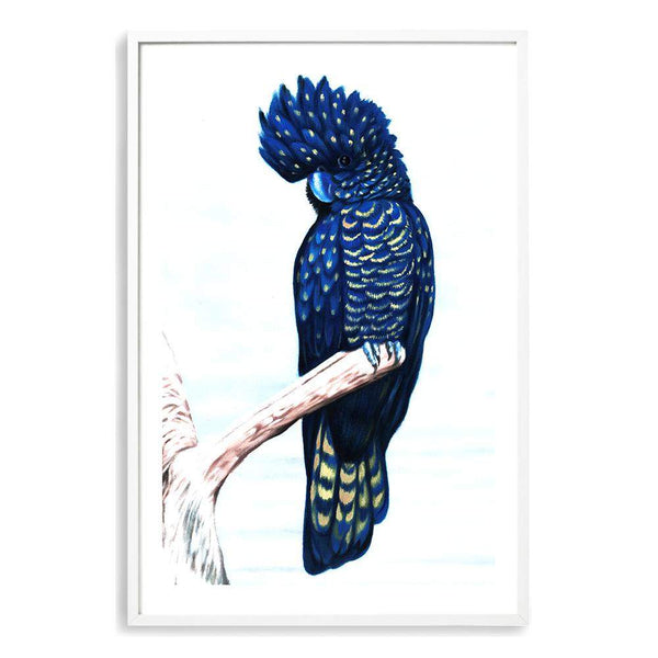 Black Cockatoo Photographic Wall Art Print or Poster By The Paper Tree.