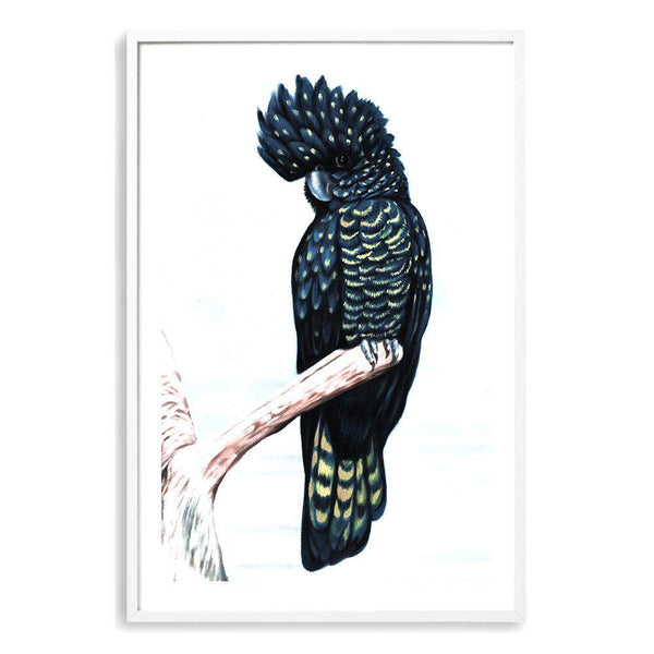 Black Cockatoo III Photographic Wall Art Print or Poster By The Paper Tree.