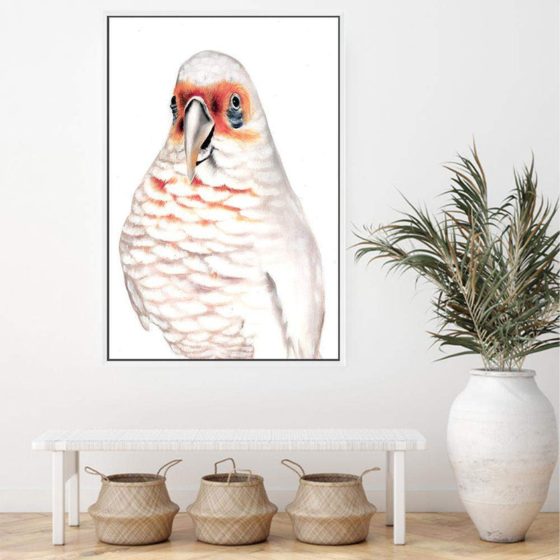Connie The Corella Canvas Art Print No.1