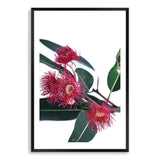 Eucalyptus Flower Art Print No.1