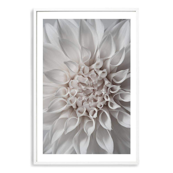 Dahlia Blooms Floral II Photographic Wall Art Print or Poster By The Paper Tree.