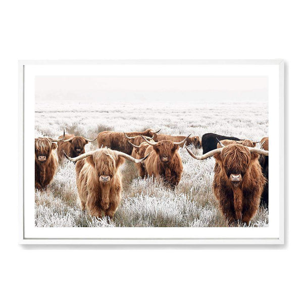 Herd Of Highland Cattle Photographic Wall Art Print or Poster By The Paper Tree.