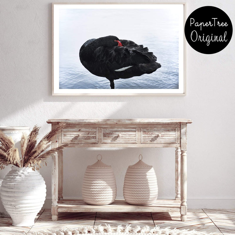 Black Swan II Photographic Wall Art Print or Poster By The Paper Tree.