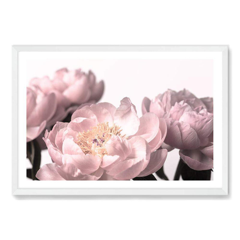 Peonies Photographic Wall Art Print or Poster By The Paper Tree.