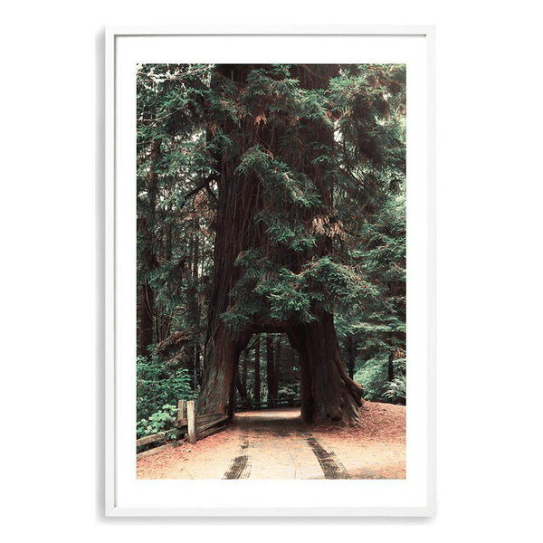 Redwood Tree Photographic Wall Art Print or Poster By The Paper Tree.