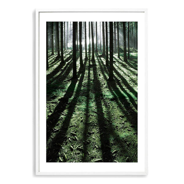 Forest Sunlight Photographic Wall Art Print or Poster By The Paper Tree.