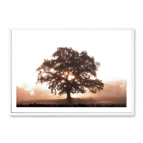 Tree In The Dawn Sunlight Photographic Wall Art Print or Poster By The Paper Tree.