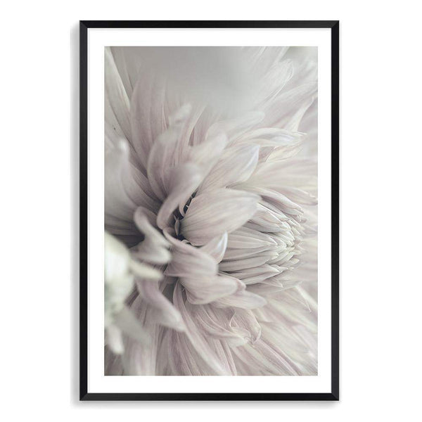 Dahlia Blooms Floral Photographic Wall Art Print or Poster By The Paper Tree.