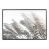 Coastal Pampas Grass II Photographic Wall Art Print or Poster By The Paper Tree.
