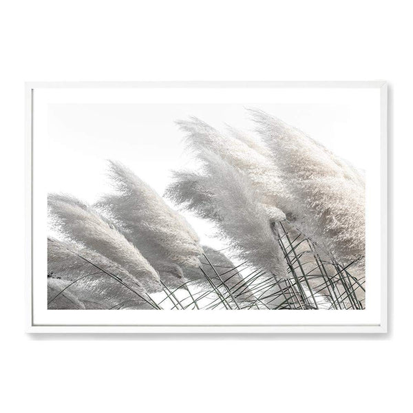 Coastal Pampas Grass Art Print No.2