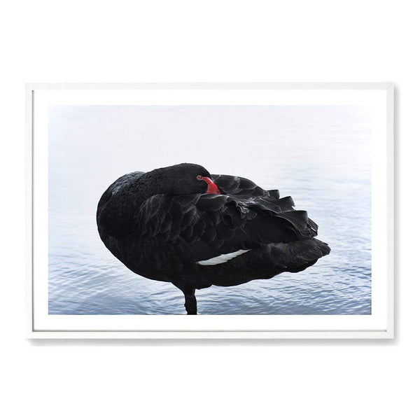 Black Swan Art Print No.2