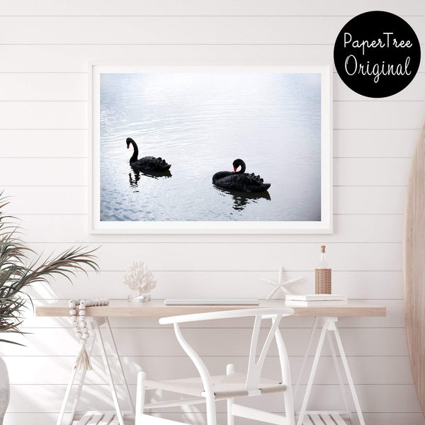 Black Swan Photographic Wall Art Print or Poster By The Paper Tree.