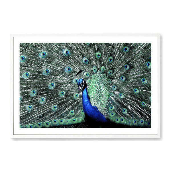 Percy The Peacock IIII Photographic Wall Art Print or Poster By The Paper Tree.