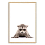 Baby Raccoon Art Print No.1