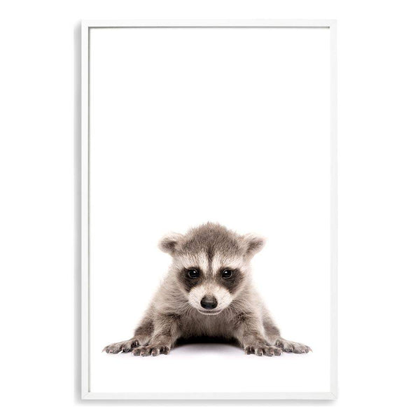 Baby Raccoon Photographic Wall Art Print or Poster By The Paper Tree.