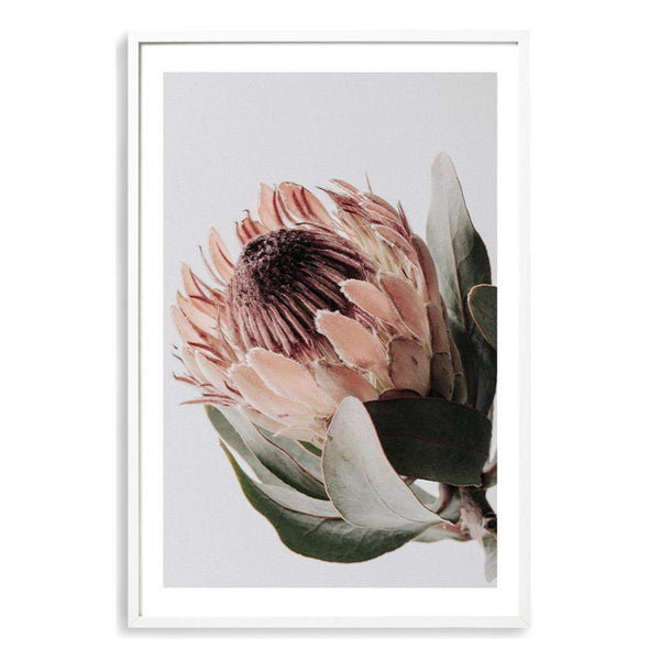 Peach Protea Floral Photographic Wall Art Print or Poster By The Paper Tree.