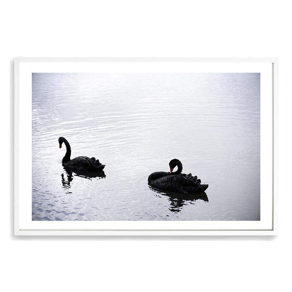Black Swan Art Print No.1