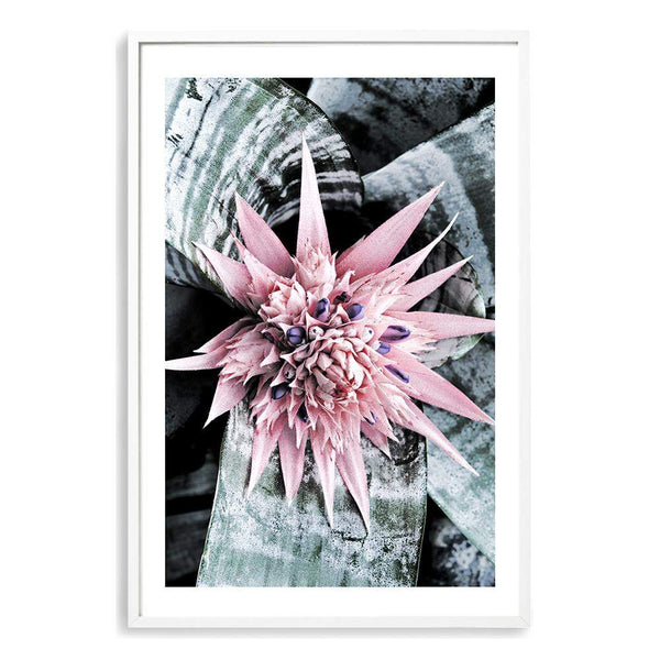 Pink Bromeliad Flower II Photographic Wall Art Print or Poster By The Paper Tree.