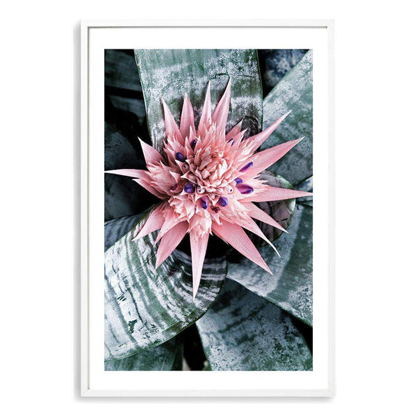 Pink Bromeliad Flower Photographic Wall Art Print or Poster By The Paper Tree.