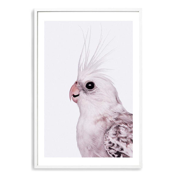 Coco The Cockatiel Photographic Wall Art Print or Poster By The Paper Tree.