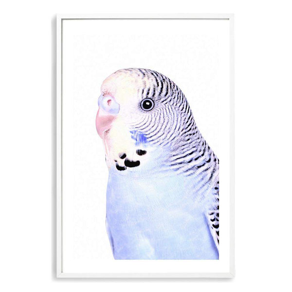 Bertie The Budgerigar Photographic Wall Art Print or Poster By The Paper Tree.