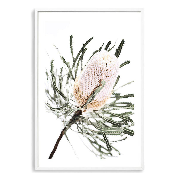 Australian Native Banksia Floral Photographic Wall Art Print or Poster By The Paper Tree.
