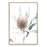 Australian Native Banksia Floral II - The Paper Tree