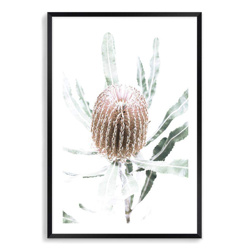 Australian Native Banksia Floral II Photographic Wall Art Print or Poster By The Paper Tree.