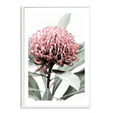 Australian Native Waratah Flower Art Print No.1