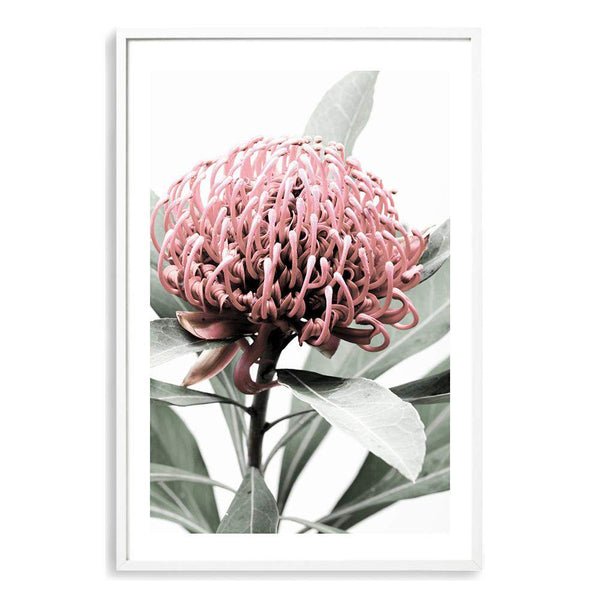 Australian Native Waratah Flower Photographic Wall Art Print or Poster By The Paper Tree.