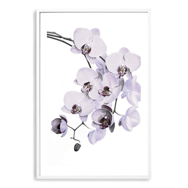 White Orchid Floral Photographic Wall Art Print or Poster By The Paper Tree.