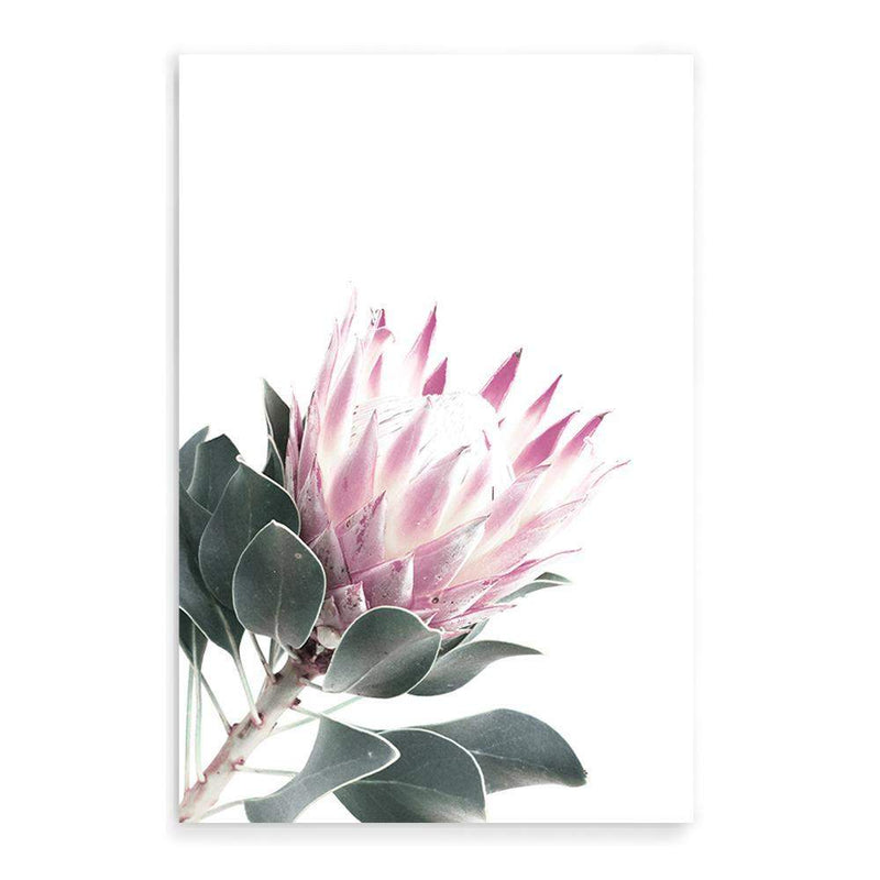 Dusty Pink Protea II - The Paper Tree