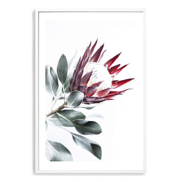 Red King Protea II Photographic Wall Art Print or Poster By The Paper Tree.