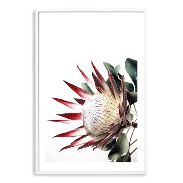 Red King Protea Photographic Wall Art Print or Poster By The Paper Tree.