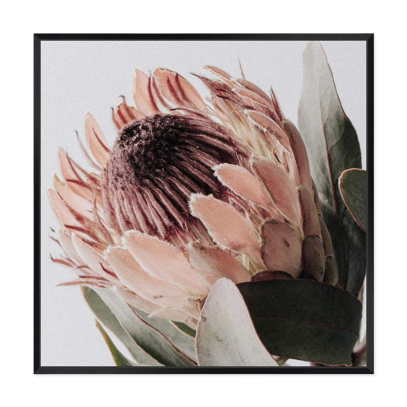 Peach Protea Flower Square Canvas Art Print No.1