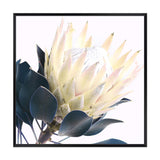 Yellow Protea Square Canvas Art Print No.2