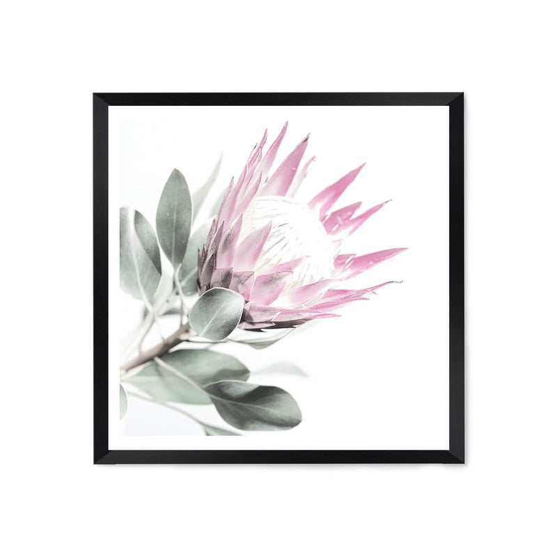Pink Protea Square Art Print No.2