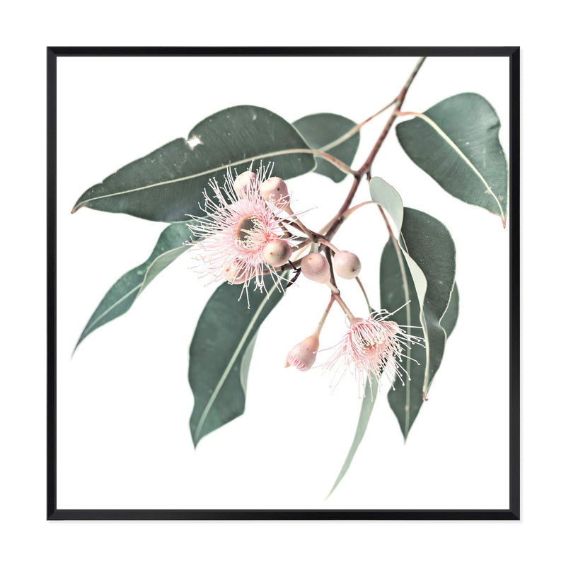 Native Gum Square Canvas Art Print No.1
