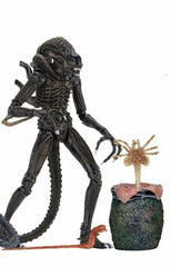 "Ultimate Aliens Warrior 1986 (Bown) - Aliens 7"" Scale Action Figure"