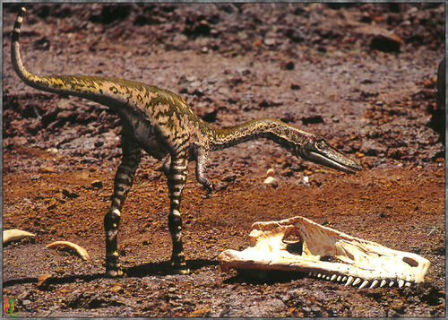 Fossile Squelette Coelophysis