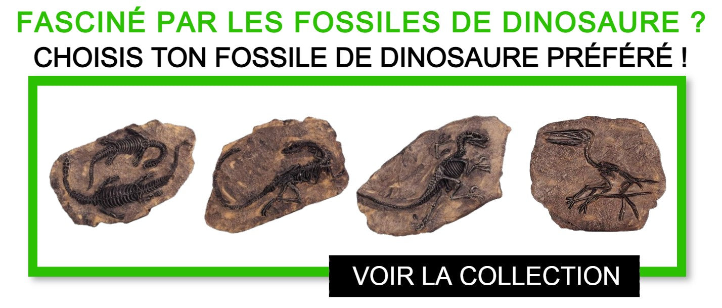 Fossiles dinosaures