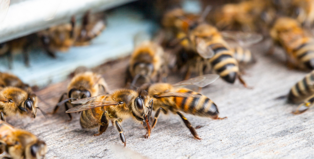 The importance of bees and how to keep them safe