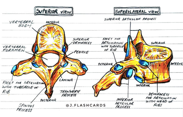 Bone Anatomy Flashcards (PDF)