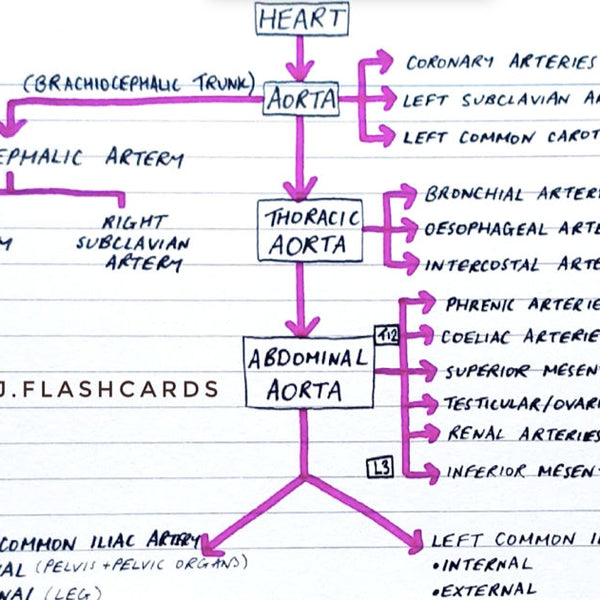 Vascular Anatomy Flashcards (PDF)
